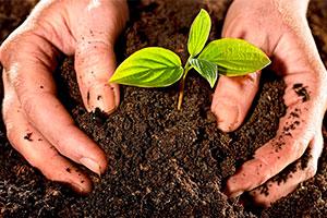 Conservar la fertilidad del suelo
